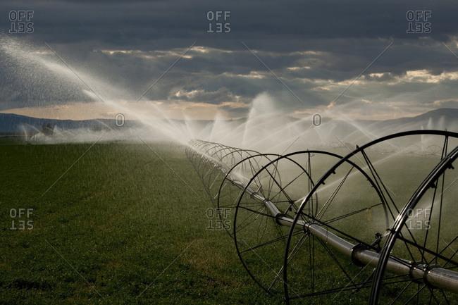 Wheel line irrigation in Californian alfalfa field