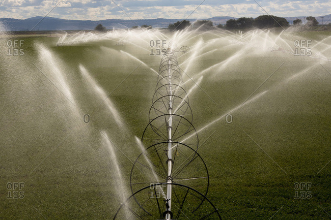Wheel line irrigating alfalfa field in California
