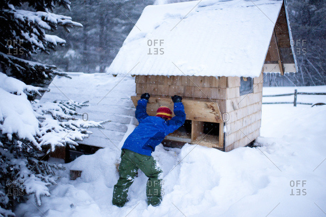 Young boy checking chicken coop for eggs