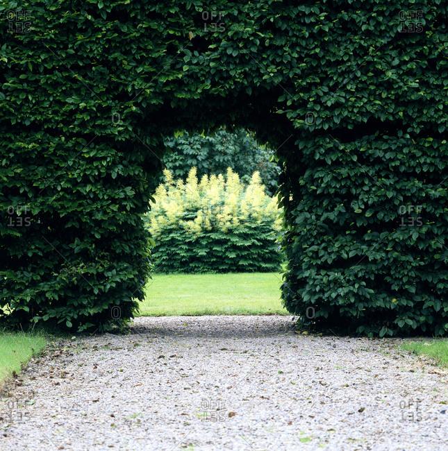 Break in an ivy hedge