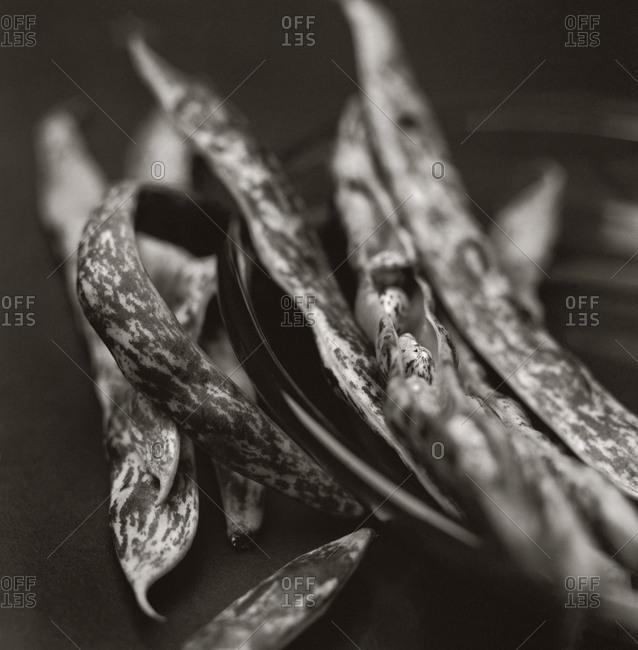 Peas in a pod in sepia