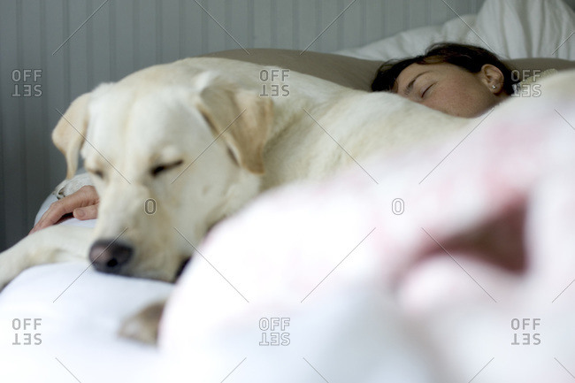 Woman and white lab sleeping in bed