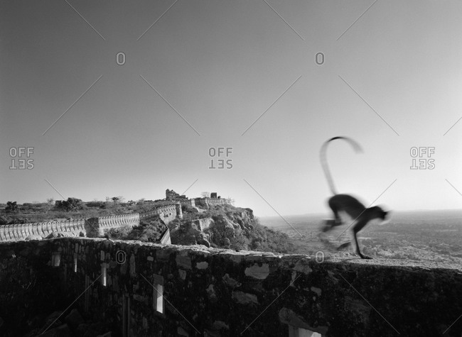A monkey running on a wall
