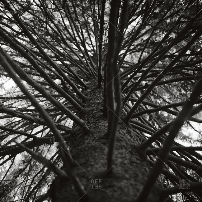 Crown of a tree in black and white