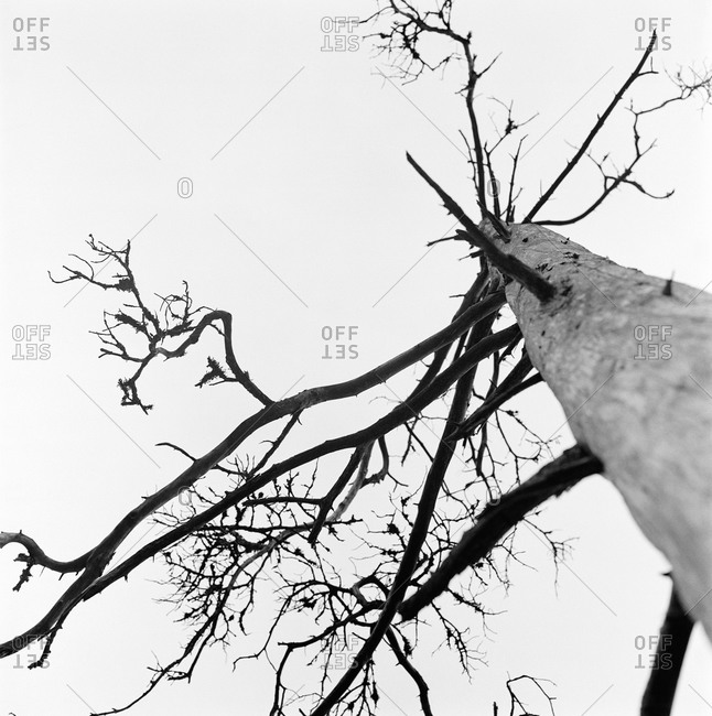 A dead tree in black and white