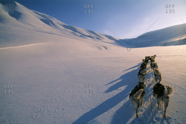 Dog sledding with Greenland and Siberian husky sled dogs