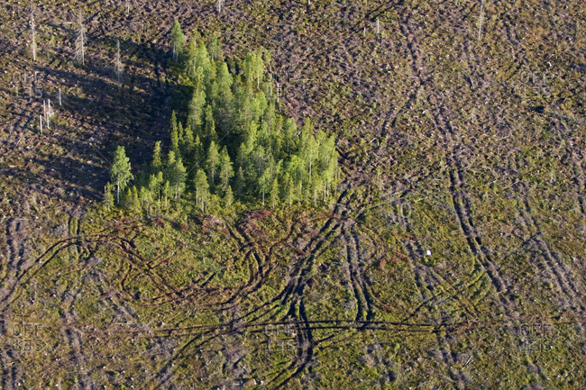 Trees at a clear-cut area, Sweden