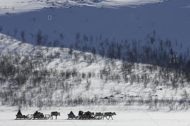 Reindeer sledding in the Swedish Lapland