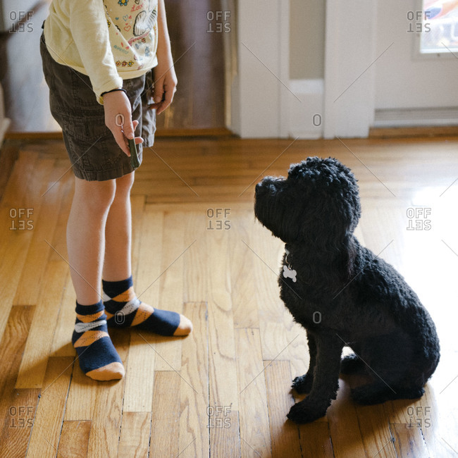 A dog sits at the feet of a child