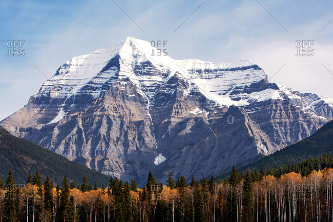 Snow-capped Mount Robson with aspen and pine trees below