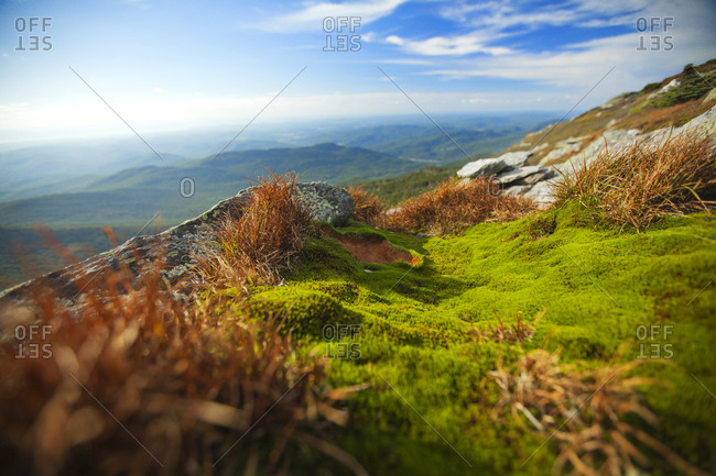 Close-up view of alpine grass on Vermont mountain