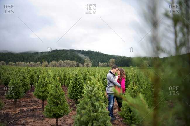 A couple standing together at a Christmas tree farm