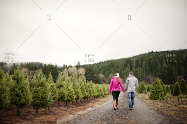 A couple walks through a Christmas tree farm