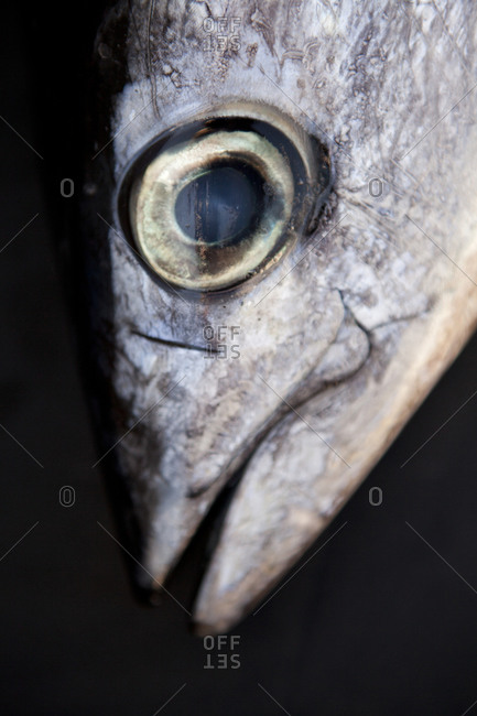 Close up of fish head