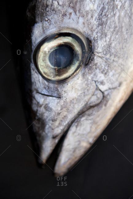 Close up of fish head