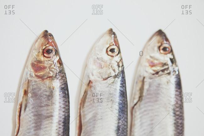 Close up of three fish heads