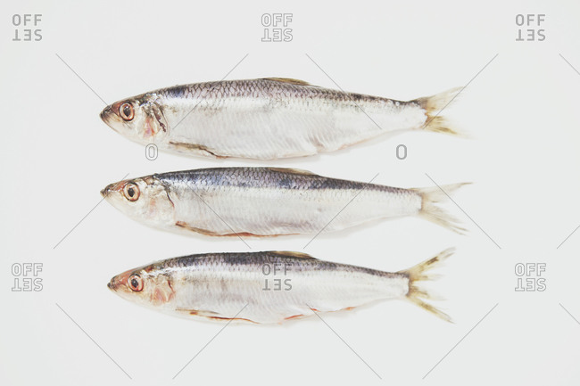 Three surf smelts on white background