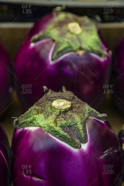 Purple barbarella eggplant  at the Mercato Orientale in Genoa, Liguaria, Italy