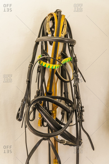 Bridles for horses in saddlery