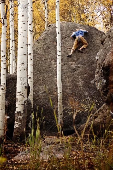 Free climbing a boulder in aspen forest