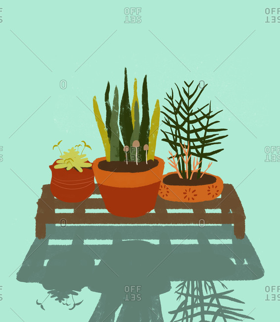 Illustration of plants in pots