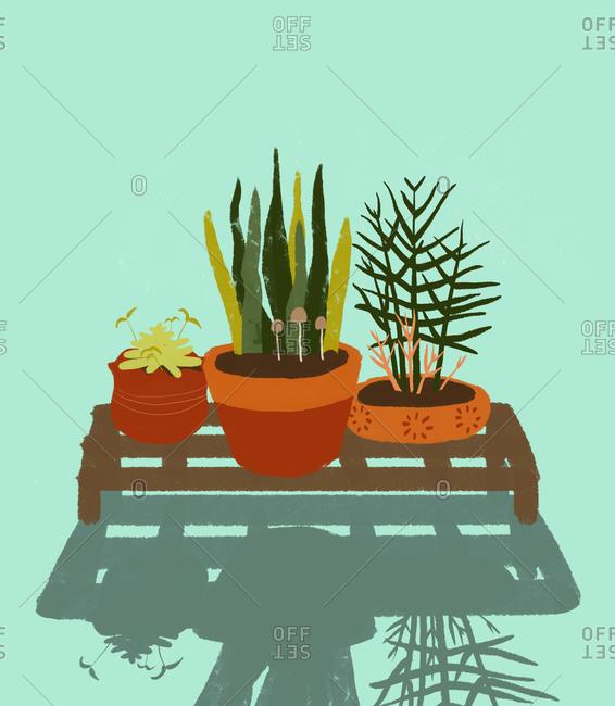 Illustration of plants in pots