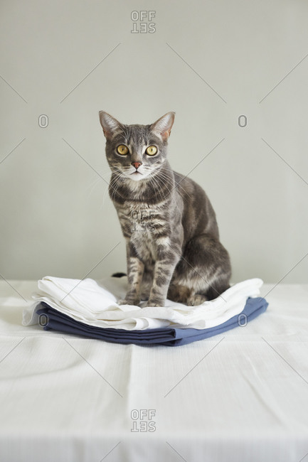 Cat sitting on folded fabric