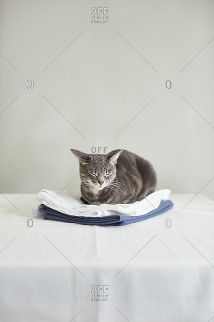 Cat sleeping on folded fabric