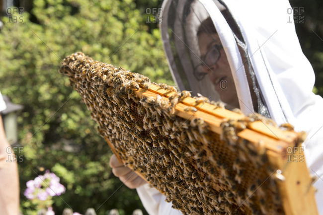 Young woman holding and inspecting a beeswax honeycomb frame crawling, honeybees from a beehive