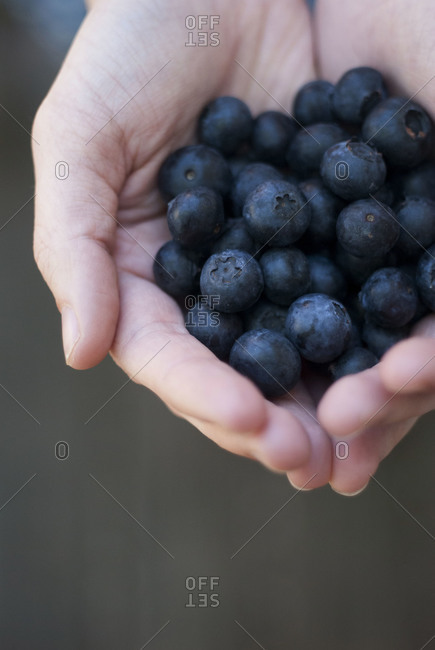 Hands cupping blueberries