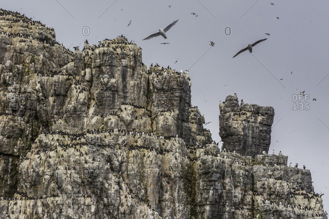 Steep cliffs filled with nesting birds on the south side of Bjornoya, Bear Island, Svalbard, Arctic, Norway, Scandinavia