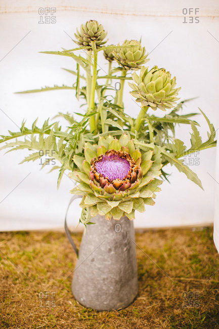 Blooming artichokes in a vase