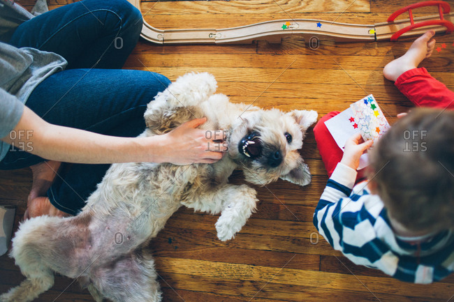 A woman scratches her dog\'s belly