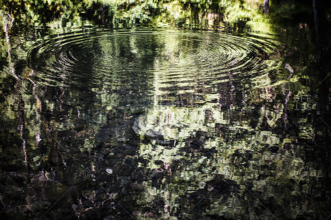 Ripples on the surface of the water