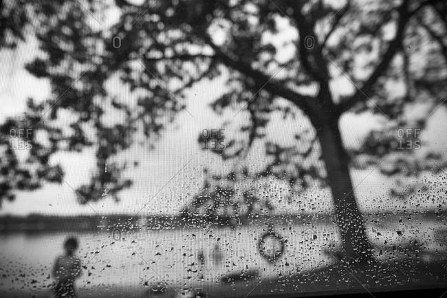 Water drops on a wet screen door