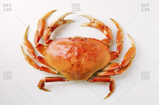 Studio shot top view of red crab