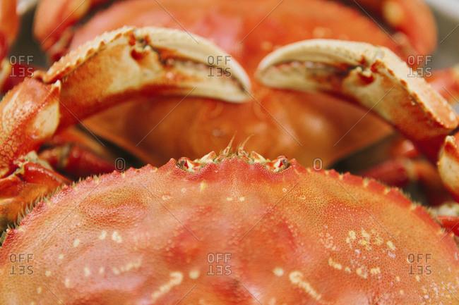Studio shot top view of red crabs