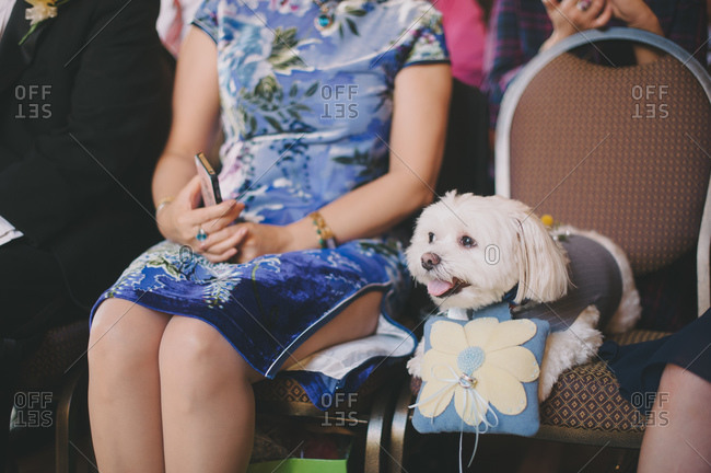 Guest at a wedding with dog holding wedding rings