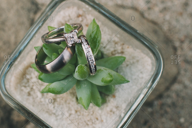 Wedding rings on a potted plant