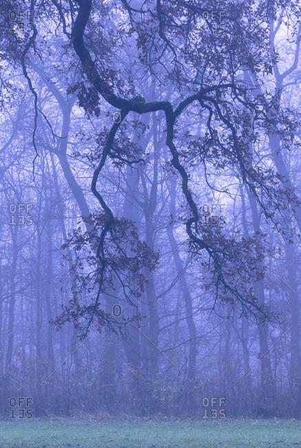 Autumn forest, morning mist