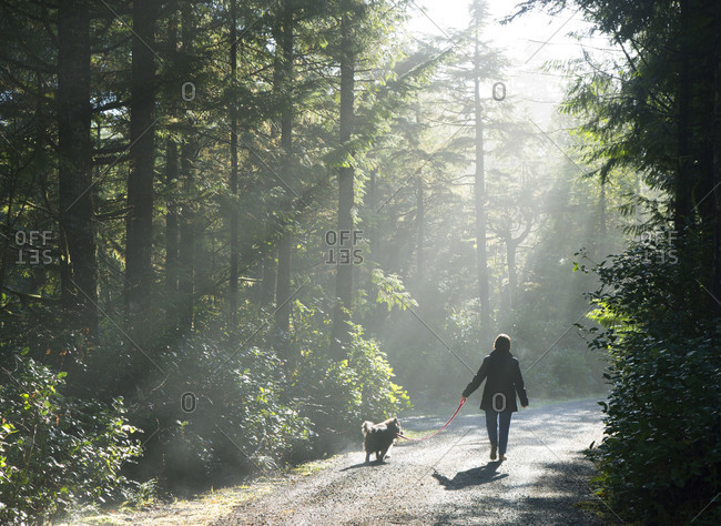Woman walking a dog on a sunny forest road