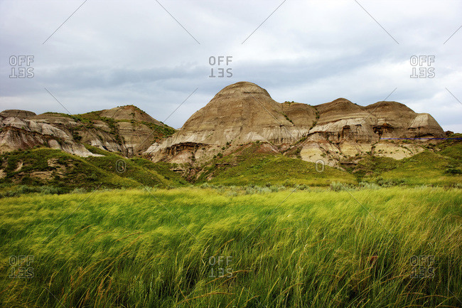 Green grass flows due to extremely wet weather in the dessert landscape of the badlands at Dinosaur Provincial Park in Alberta, Canada