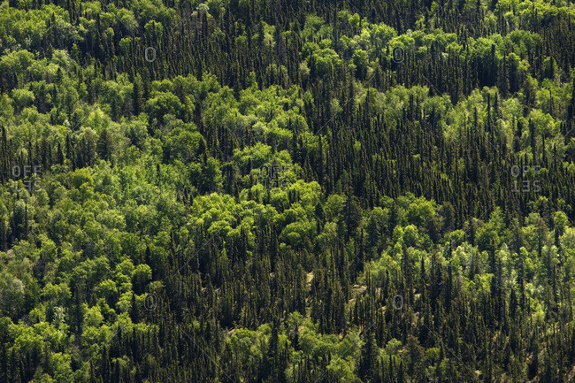 An aerial view of the boreal forest in northern Saskatchewan, Canada