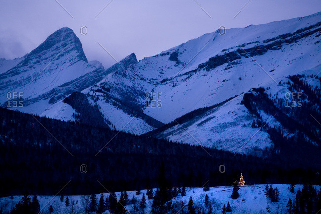 A lone Christmas tree shines in the evening light near Banff National Park in the Canadian Rocky Mountains