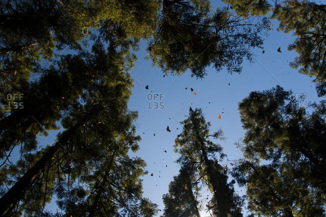 Butterflies swarming in the sky