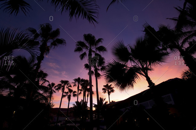 Silhouette of palm trees at dusk in Mexico