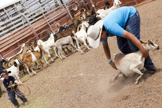 Galisteo, NM, USA - Circa 2014: Children's goat roping contest at Galisteo Rodeo