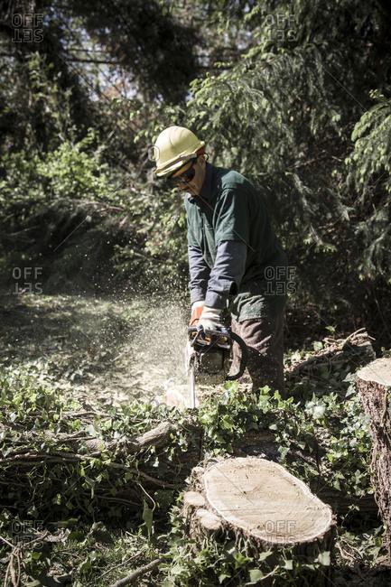 Cabin John, April 10, 2010: Miguel Carmelo cutting fallen Mulberry Tree trunk