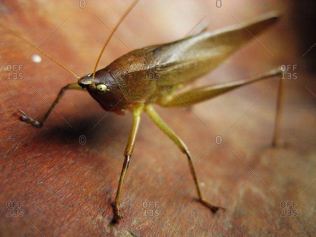 Brown insect on wooden surface