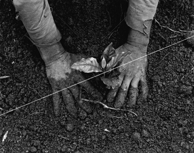 Close up of person planting a seedling